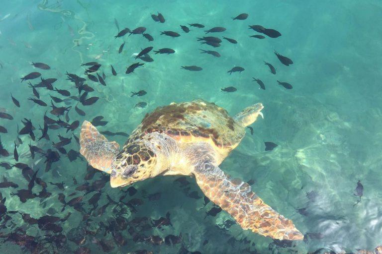 Sea turtle near kastellorizo