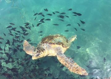 island of ro - sea turtle
